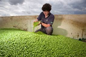 Great British Pea Week returns